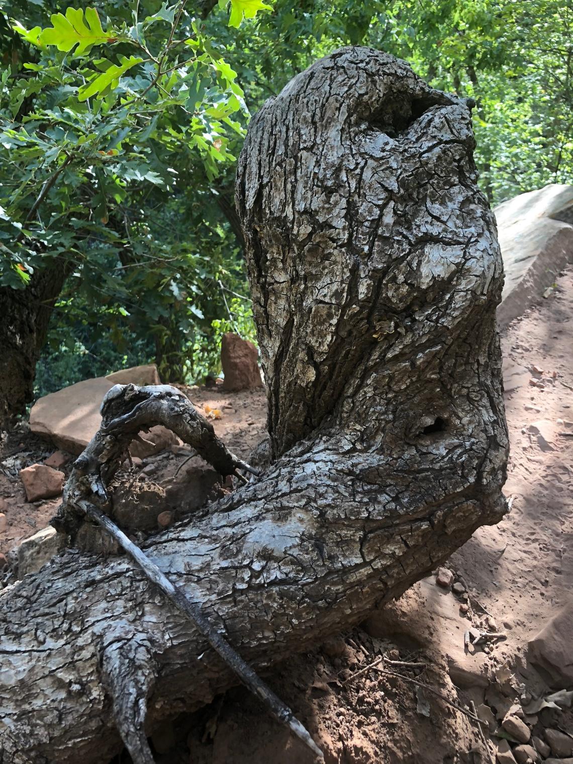 sedona tree 2